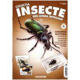 Insecte din lumea intreaga nr.6 - Carabida Bijuterie
