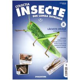 Insecte din lumea intreaga nr.11 - Lacusta uriasa